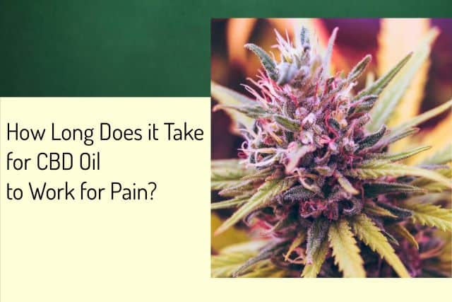 How Long Does it Take for CBD Oil to Work for Pain?
