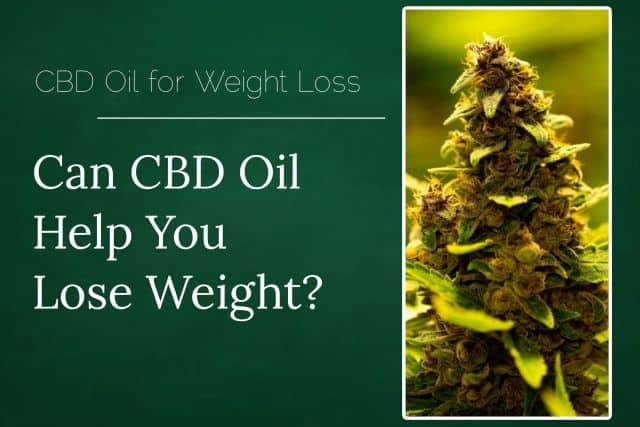 CBD Oil For Weight Loss - Does CBD Oil Cause Weight Gain?